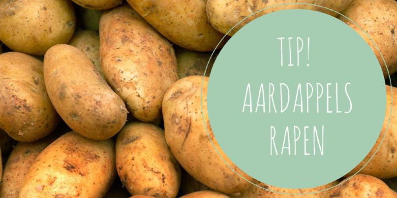 Aardappels rapen