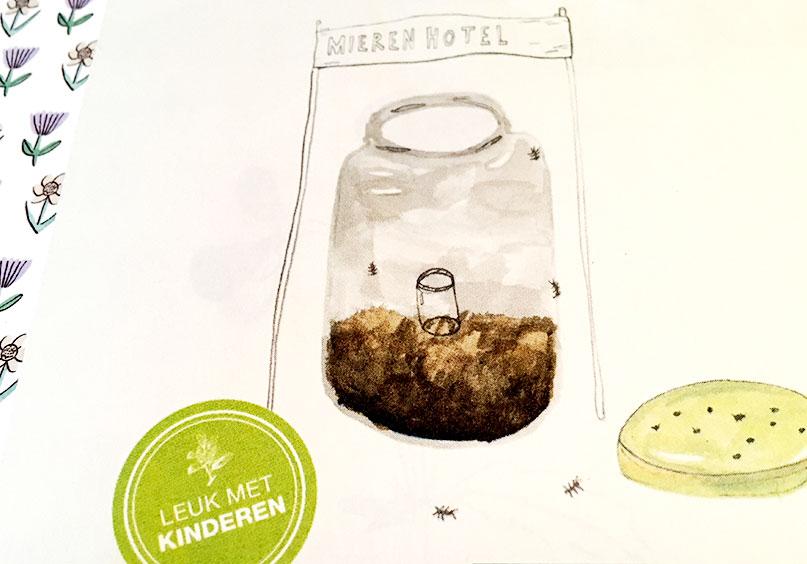 natuuractiviteiten-zomer - mierenhotel