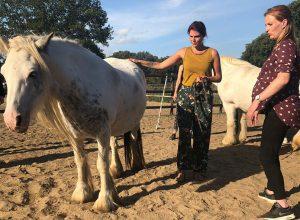 happiness cafe spiegelen met paarden