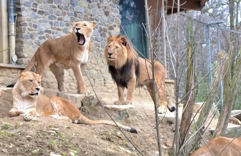 Zoo onsabruck