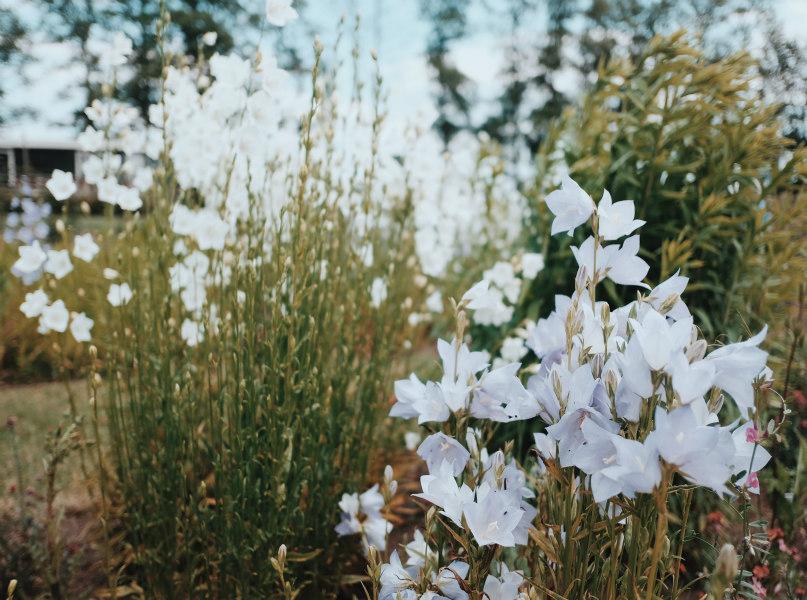 Prachtige verse bloemen kunnen geplukt worden