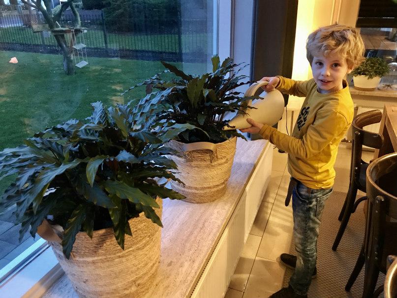 Helpen met de planten