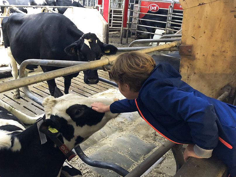 Landgoed Kaamps Deurningen koeien