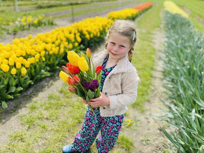 Tulpen plukken bij het Duvelshofke